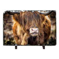 Highland Cow Slate AS_30_LS